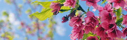 copertina fiori
